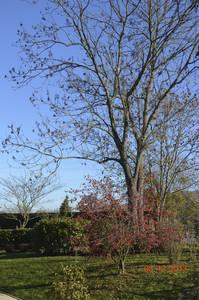 de25c-photo_arbres_terrain